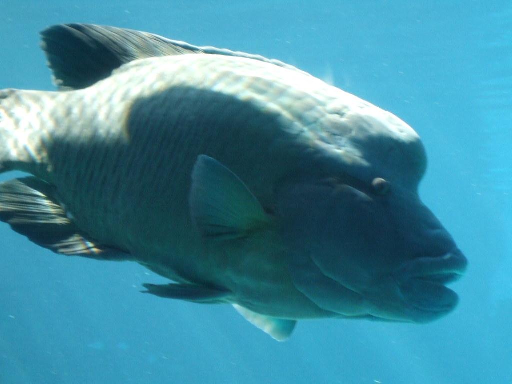 Big Fish At Sea World A Funny Looking Big Fish At Sea