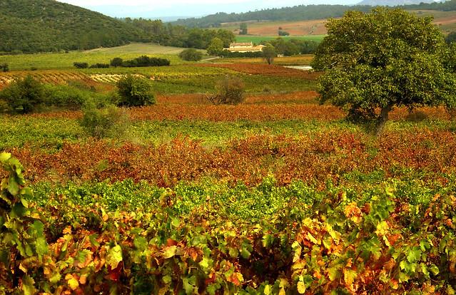 Vignobles - Seillons (Var)