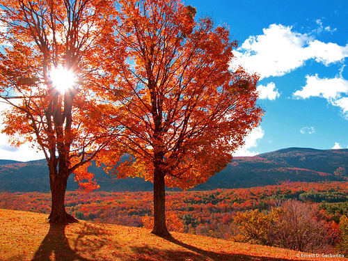 autumn trees orange sunlight mountains fall leaves landscape manchester hills foliage valley vt lightrays greenmountains wilburtoninn