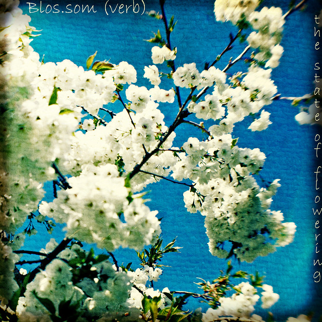 Blossom (spring) - The Dictionary of Image