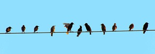 Birds on a Wire | by CaptPiper