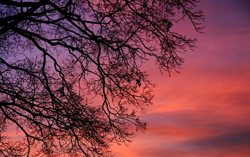 pink blue sunset sky orange tree nature colors beautiful silhouette purple dusk bare branches peaceful lacy tranquil platinumphoto subminvthrplatphotg022809129a
