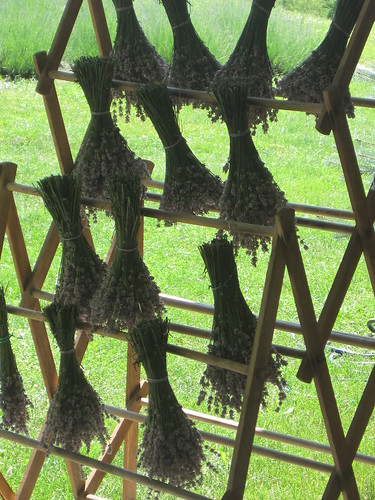 Lavender Drying | by aMichiganMom