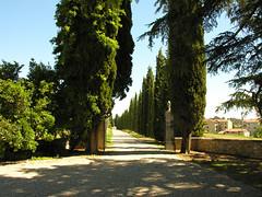 Tuscany 2007 - Felsina Wineyard (014).jpg