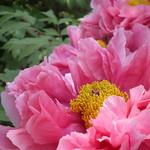 Flowers #208