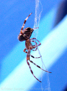 DSC09944 - Spider (San Francisco) | by loupiote (Old Skool) pro