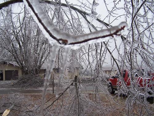 icestorm 2007 winter january severeweather ice frozen limbs trees branches lacledecounty missouri ozarks midwest winterweather weather winterstorm freezing cold lebanonmo lebanonmissouri outdoor