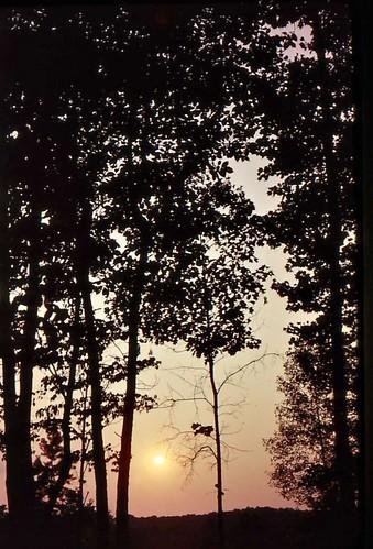 trees sunset usa beautiful silhouette geotagged ilovenature northcarolina lakenorman johndalkin heavensgatejohn geolat35438575 geolon80914307