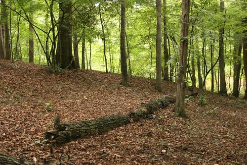 tree fall nature log woods