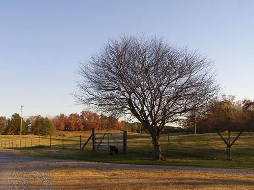 november landscape 2006