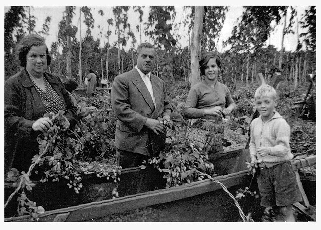 Hop picking in Marden 1959