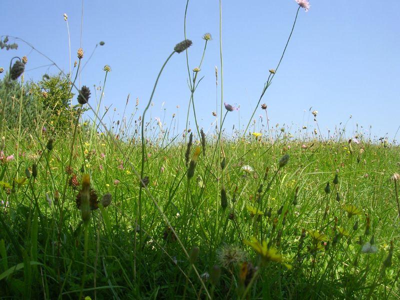 Bug's eye meadow Arundel to Amberley
