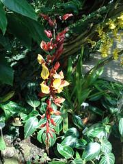 DSC02002 Orchidee