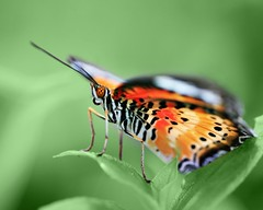 butterfly on a green background | by Raimy