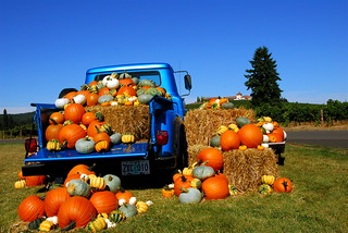 King Estate winery pumpkin harvest | by Don Hankins