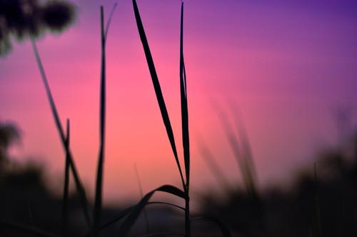 sunset 50mm nikon purple bokeh blades d90 14d