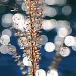 Nature illuminated