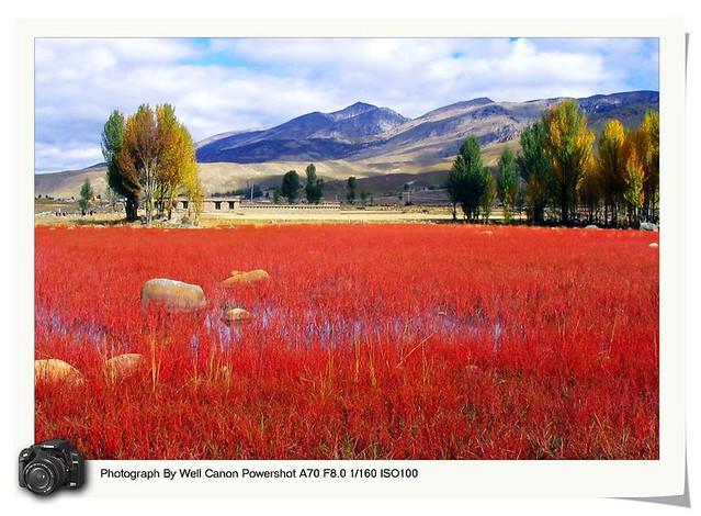 Natural red grassland of Daocheng