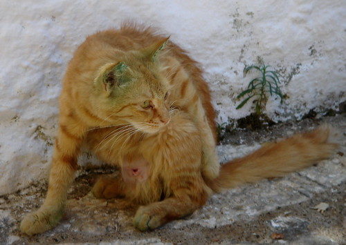 Vihreä Kissa