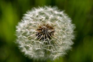 allergies | by jfl1066