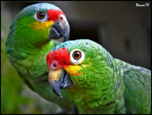 Rosita and Curricun