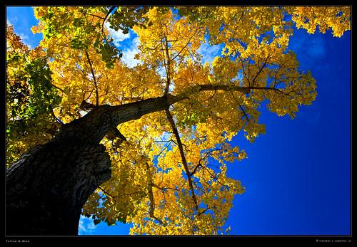 canada calgary autumncolors alberta ef1740mmf4l canonllens mywinners canonrebelxti400d impressedbeauty adobelightroomlr michaelilogatoc