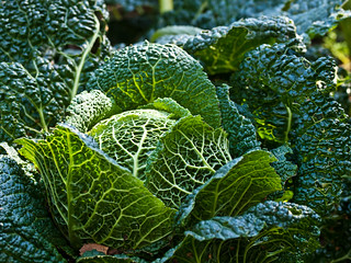 Cabbage | by wwarby
