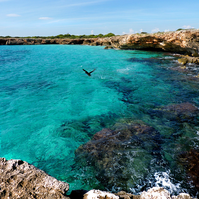 Green Cormorant liftoff at the blue waters of Menorca