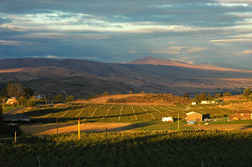Organic Berry Farm - Yakima | by lkn4snow photography