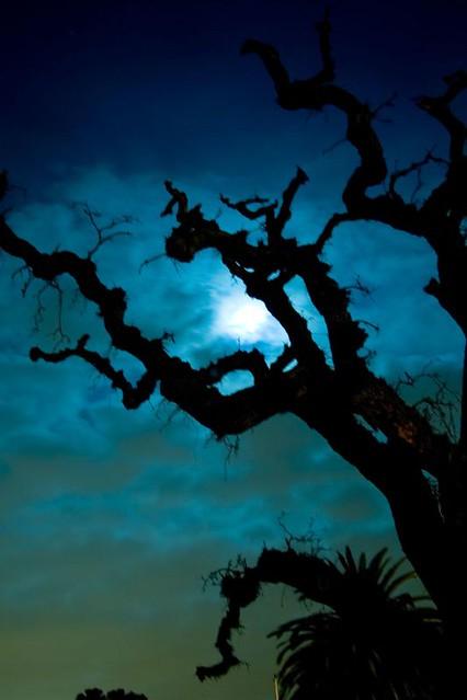 Dead Oak Tree & A Harvest Moon