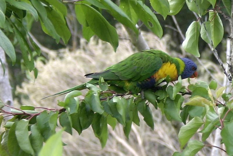parrots_01.jpg