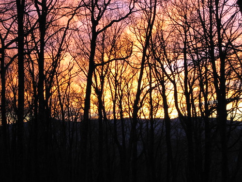 winter light sunset tree colors clouds outdoors smokymountains criticismwelcome