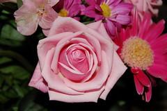 Like, flowers