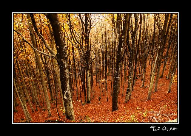 Colori in autunno (3)
