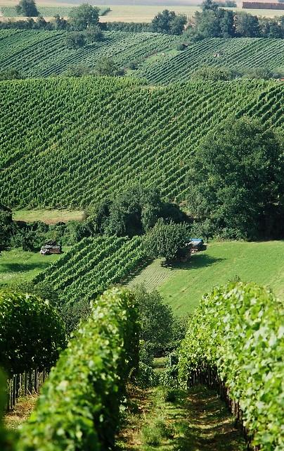Weinlandschaft im Kraichgau