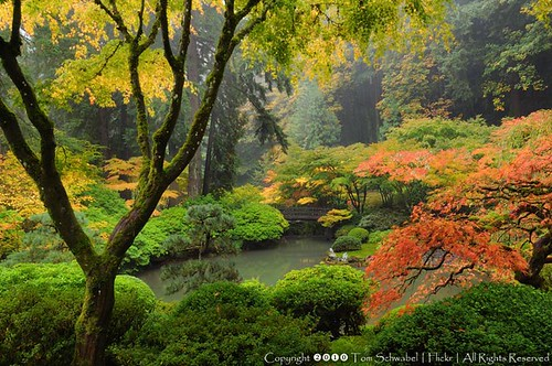 bridge autumn trees colors oregon garden portland japanesegarden pond tomschwabel