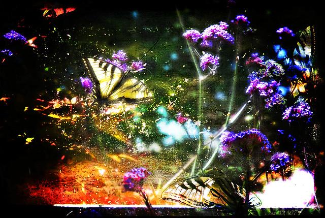 Butterflyland