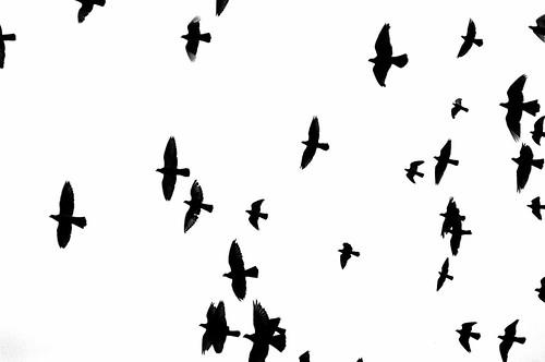 flock | by spDuchamp