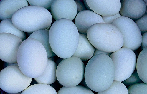 Blue Duck Eggs | by jdcb42