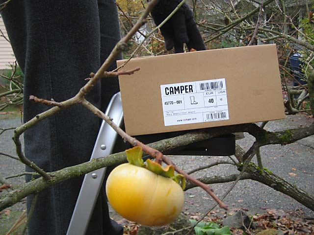 Camper box w/persimmon in foreground