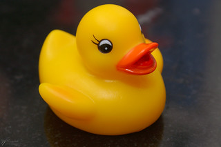 Rubber Duckie | by Steve Webel