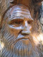 Leonardo Da Vinci carved into a tree stump at the Arthurs Seat Maze | by ajft