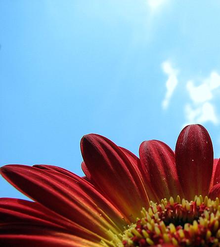 Flower & sky