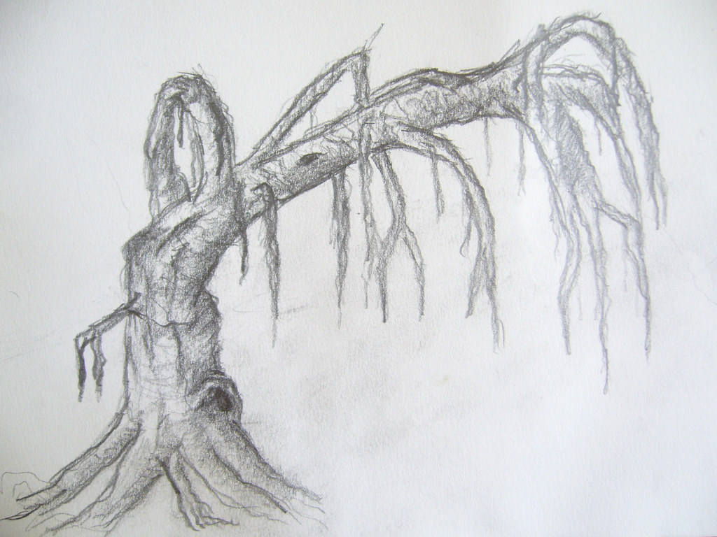 Drawing Old Tree Hand Drawen A3 Image Marcus Krautwurst Flickr