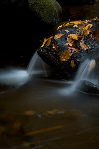 longexposure autumn fall leaves nc moss rocks northcarolina cascade southmountainsstatepark burkecounty jacobsforkriver davidhopkinsphotography photocontestfall10 ncpedia