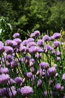 20100509 garden day7 | by schnell foto