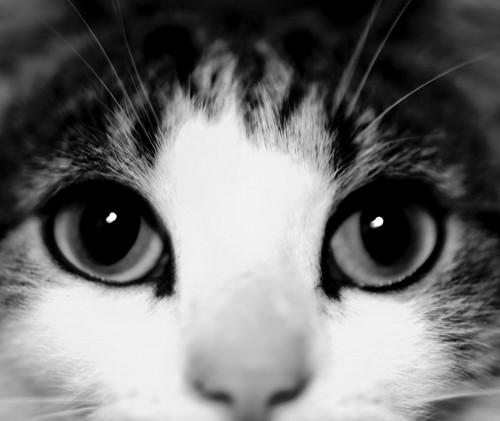 cat | by nszasz26
