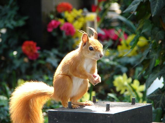 Tombstone squirrel, Vyšehrad Cemetery