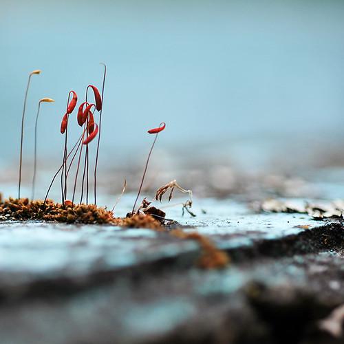 color macro nature moss nikon d60 magicunicornverybest wormseyeviewsunday
