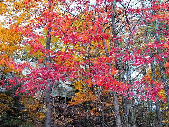 Red Yellow Orange Trees